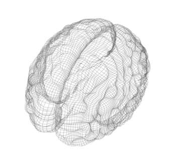 The Brain Functions Mathematically!
